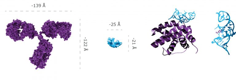 Aptamer Chart Antibody
