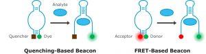 Aptamer Optimer Beacon