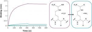 Highly selective aptamer