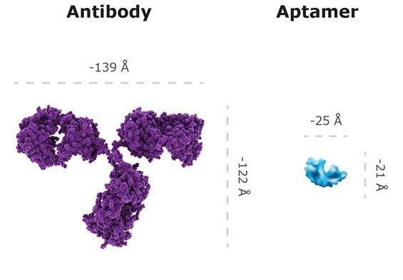 antibody v aptamer